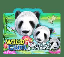WildGiantPanda-joker